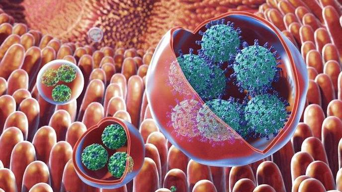 'Highly Infectious' Norovirus Clusters Show Resistance to Disinfectants, Scientists Warn of 'Superbug'