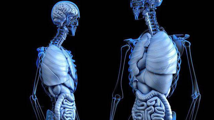 New Approach to Understanding Bone Strength Pays Dividends for Osteoporosis