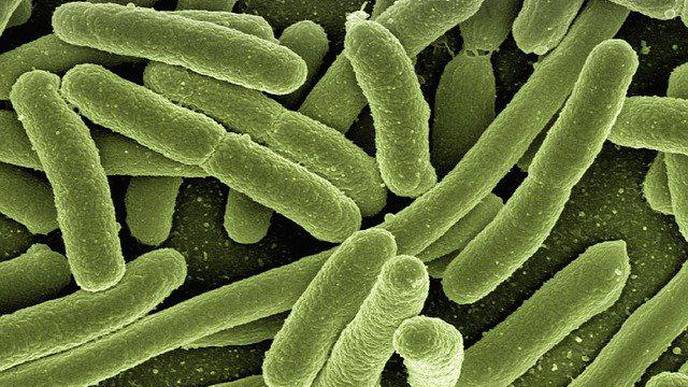 Medieval Medicine Remedy Could Provide New Treatment for Modern-Day Infections
