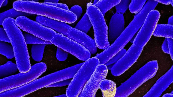 Gut Microbes May Be the Key to Unlocking Anxiety
